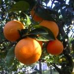 """""""L'altra faccia dell'arancia"""": Intervista a Boubker Elhafian"""