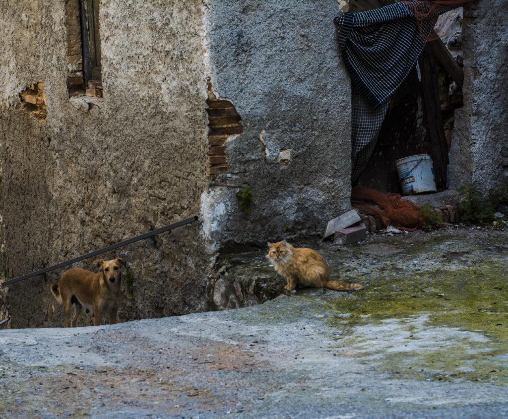 Un cane ed un gatto che vivono in perfetta armonia